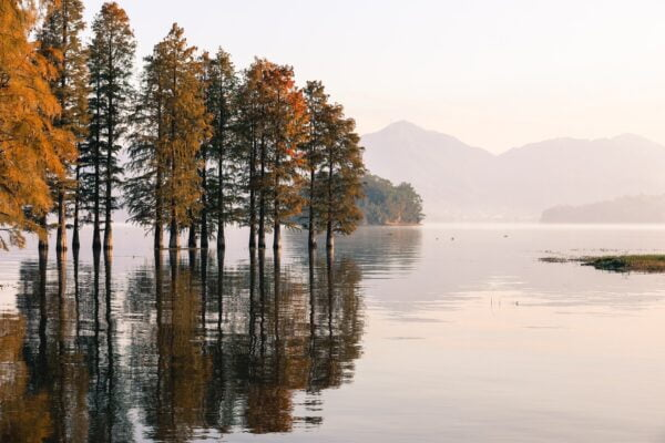autumn trees on a lake in finland as  a safe place to travel